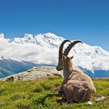 classic tour du mont blanc 7 hiking days